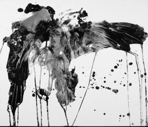 Dead grey heron, 1990 - Altered silver gelatin print.